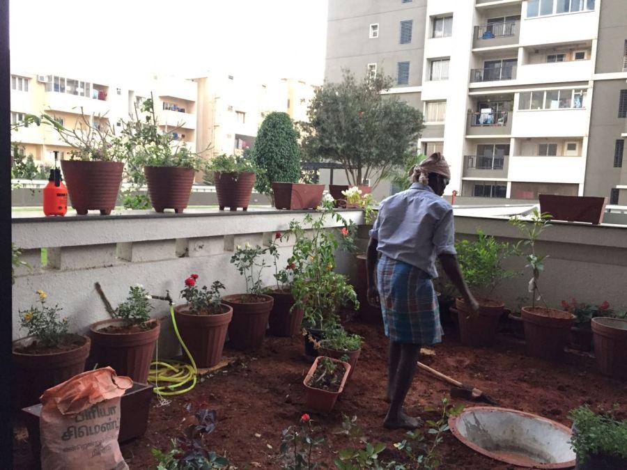 Garden getting some shape